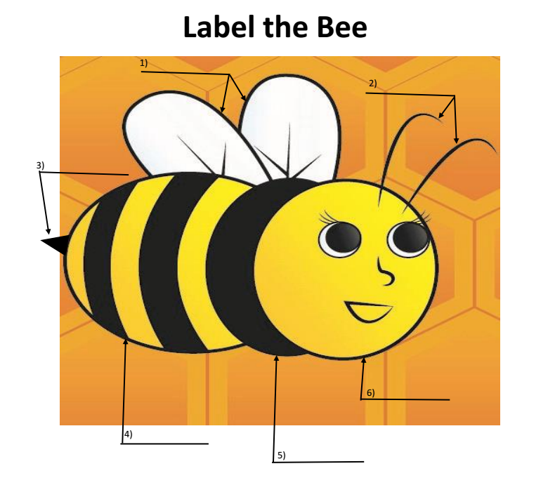 Label The Bee